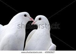 Deux pigeons... (inspiré par Mamitou ma grand-mère)