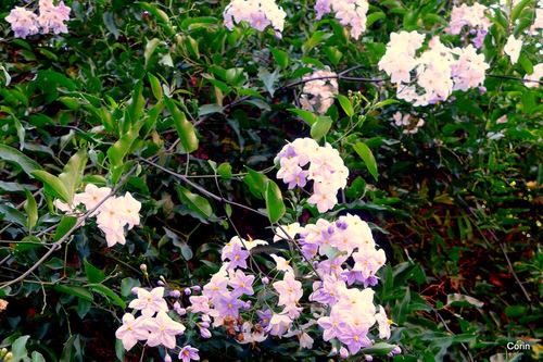 De belles fleurs blanches