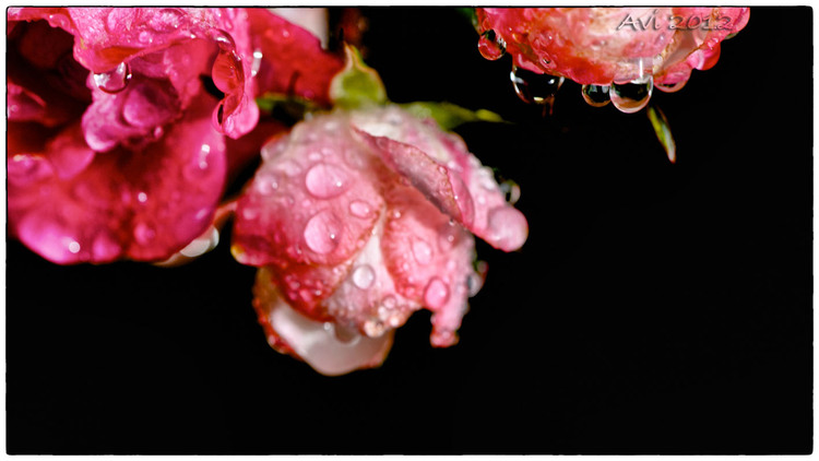 Hier, la pluie...