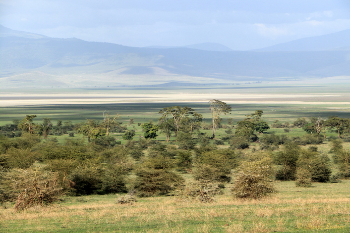 Faunes et forêt du cratère du Ngorongoro
