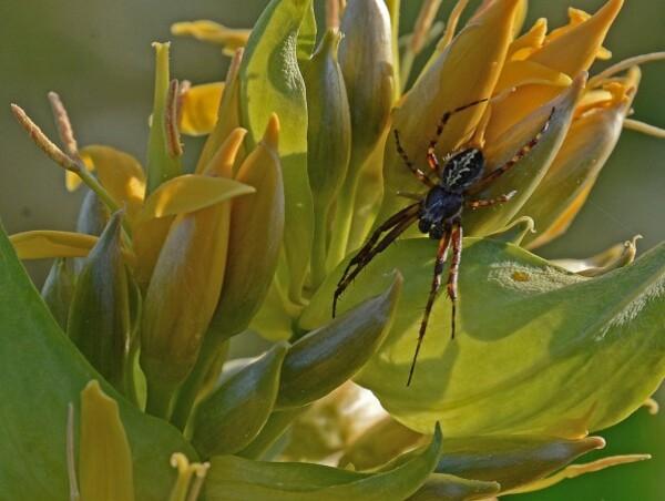 Insectes-papillons-5-5767.jpg