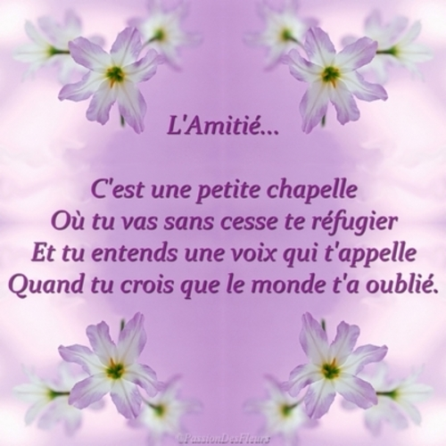 Citations d'amitié