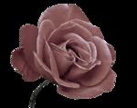 rose vieux rose.png