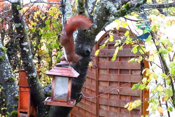 Un poilu dans mon jardin pour le 11 novembre....