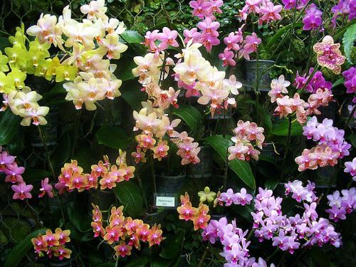 Jardin-du-monde-orchid--es-XIV.jpg