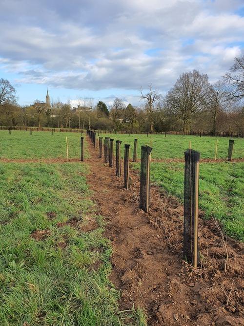 Nouvelles plantations sur la ferme
