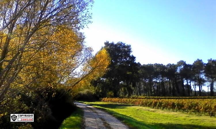 Sauternes (Gironde),ces vignobles ,son paysage ,magnifique et belle balade ou l'automne commence a venir