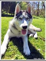 Jasko (7 mois)