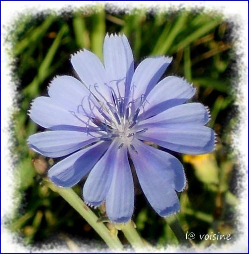 ok Ho ! La belle bleue !!!
