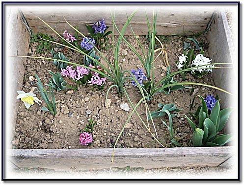 printemps-jardin-2012-5.jpeg