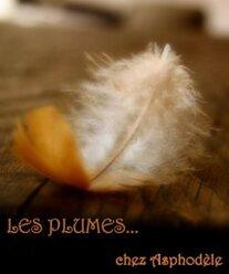 Les plumes d' Asphodèle.