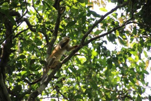 Dans le parc Manuel Antonio (Costa Rica)