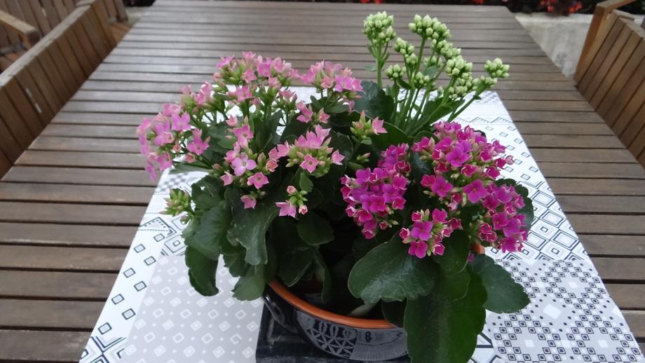 Quelques fleurs....