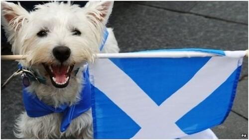 Scotland's referendum on BBC News
