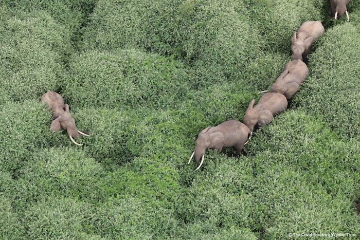 Ils Défendent Les Derniers Éléphants Du Kenya...Ce Sont Des Héros..