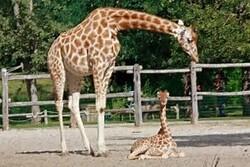nimaux des zoos