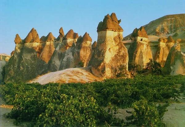 vignes-cappadoce