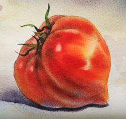 Nature morte aux tomates - réalisation de l'aquarelle en quelques vidéos.