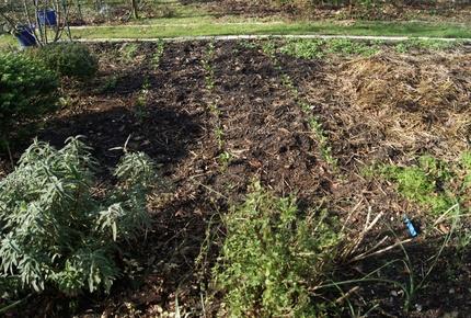 Mon jardin fin janvier 2013