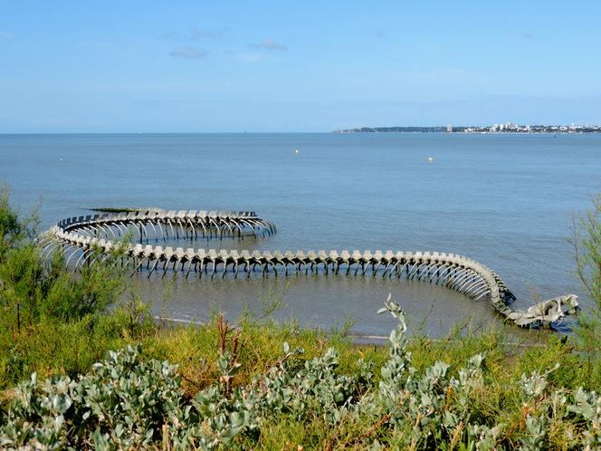 Serpent d'océan dans l'estuaire....