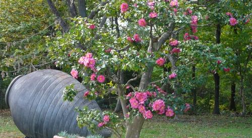 Parc floral des Camélias à Alès