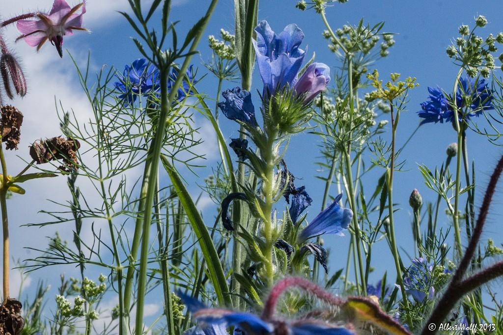 L'Aire du Jura en fleurs