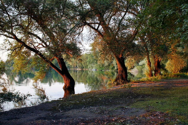 Sur les bord du Rhin