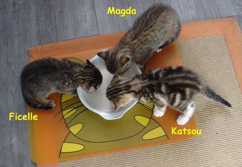 Le nom des chatons
