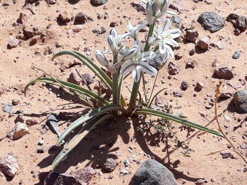 Là au milieu du désert