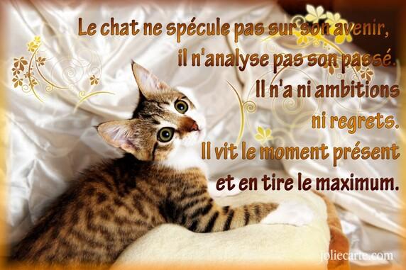 Journée chats 5