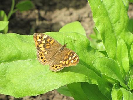 les-papillons-6457.JPG