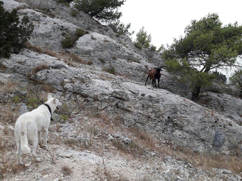 A la rencontre des chèvres beh!!