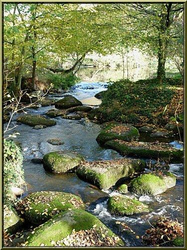 arbres-eau-et-pierres.jpg