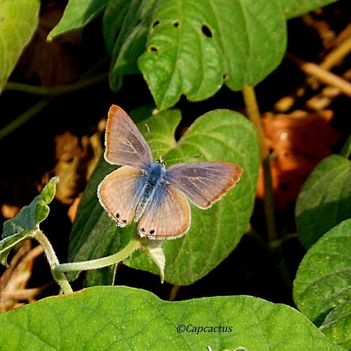 Les papillons du jour