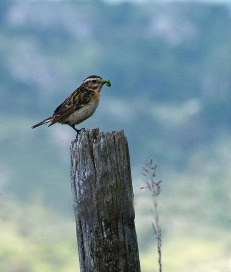Oiseaux-2-3959.jpg