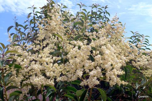 Les jolies petites fleurs blanches