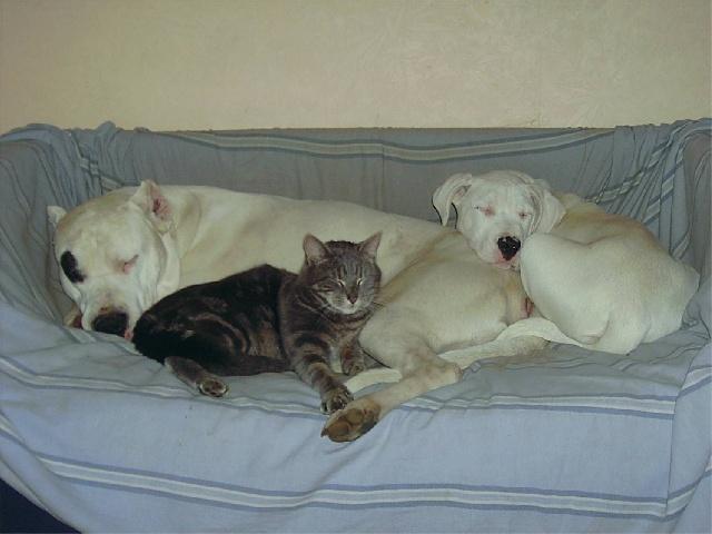 Un canapé pour trois