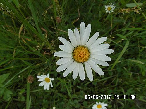 fleurs-5-Juin-014.JPG