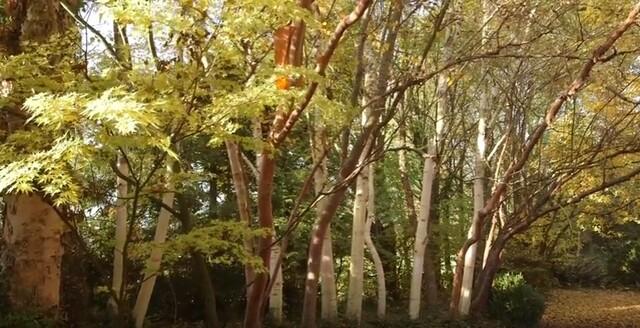 Jardin Jardinier : La pépinière Jean-Pierre Hennebelle