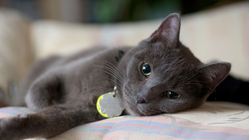 Cats | The Humane Society of the United States