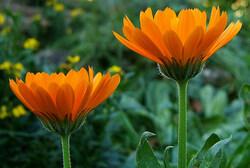 "1° mai : 29 plantes dans notre salade ""mi-sauvage"""