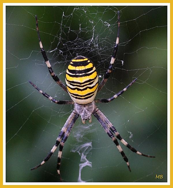 Arachnides 3057b
