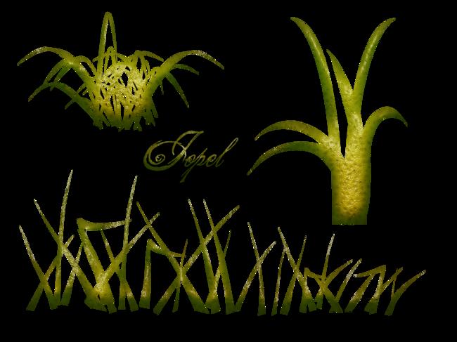 Kit fleur Marguerite