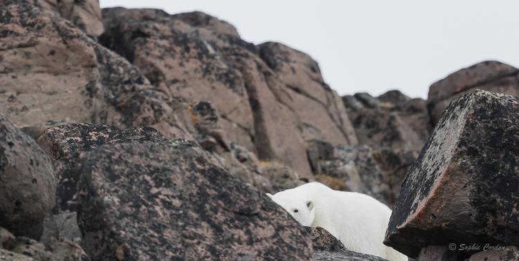 Récit de voyage - Edgeøya, suite de la suite