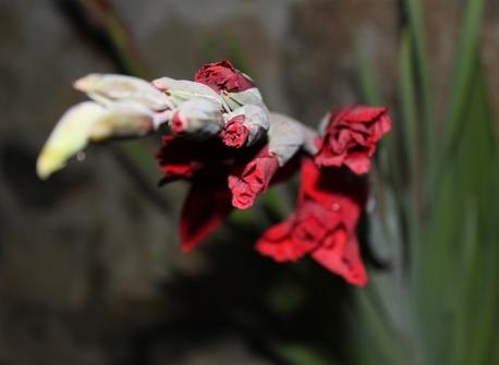 Jardin en fleurs ! (8)