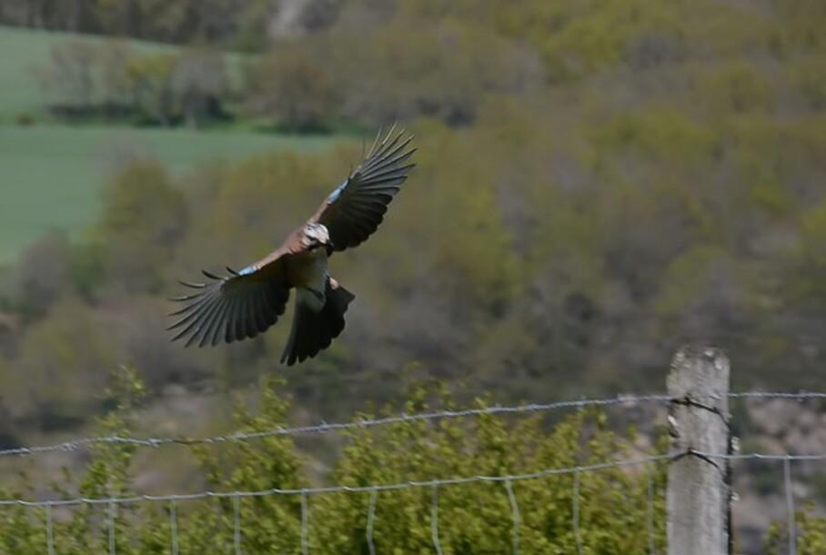 Oiseaux-2-5810-aa.jpg