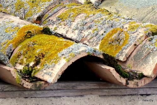 Toit et lichens ...