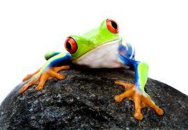"""Résultat de recherche d'images pour """"la petite grenouille sourde"""""""