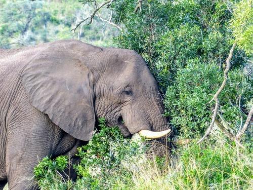 safari dans la réserve de Hluhluwe; suite;