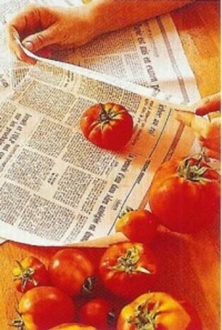 "Faites-les rougir ...""les tomates"" .."